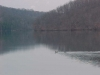 ducks-reservoir