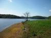 reservoir_tree